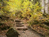 El sendero está bien mantenido con troncos de madera que hacen de escaleras.