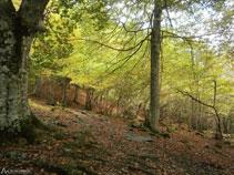 Caminamos por entre el bosque haciendo una ligera subida.