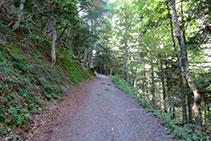 Avanzamos un tramo por dentro del bosque. Abetos, hayas, abedules... nos aportan una frescura reconfortante si hacemos la ruta en pleno verano.