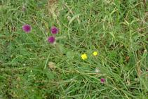 Una de las muchas flores que podemos observar en el valle de Otal.