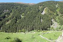 Al otro lado, parte umbría del valle con un bosque denso de pinos y otras especies caducifolias.