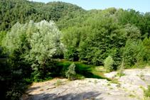 El bosque de ribera en Sant Quirze de Pedret.