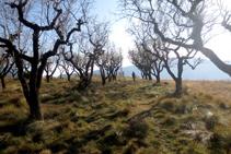 Vista panorámica de los bancales del Roc de Pessonada.