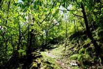 Parte baja del bosque de Arnui.