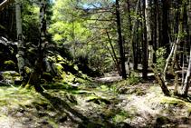 Juegos de luces y sombras en el bosque de Arnui.