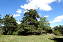 Llano de las bordas de Arnui.