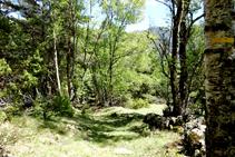 Camino de las bordas a Llavorsí.