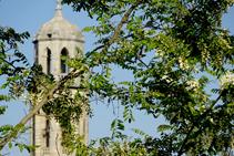 Campanario de Sant Esteve detrás de una rama de falsa acacia.