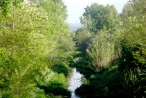 Río Onyar y bosque de ribera.