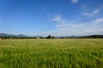 Campos de trigo de Can Salamanya.