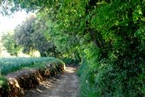 Bosquet de Can Coll antes de llegar a Sant Dalmai.