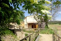 Saúco (<i>Sambucus nigra</i>) y el molino de las Fonts.