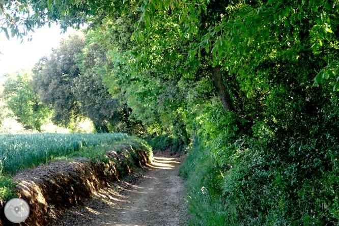 Vuelta por el Rec de Banyacans y las Fuentes de Salitja 1